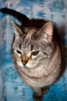 Cats Christmas Portraits 2010-0560-2