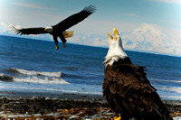 Anchor Point Eagels Poster-0320