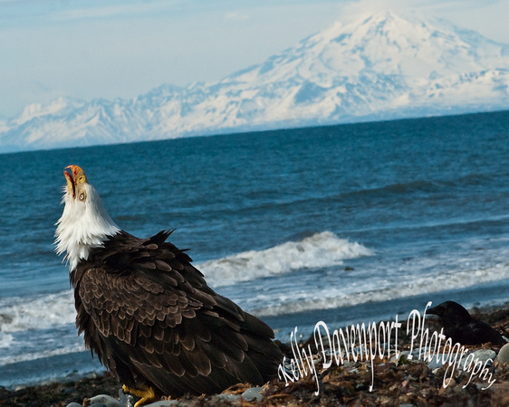 Eagle at Anchor Point-0089