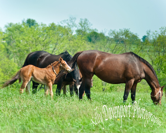 Horses in the Bluegrass-0524