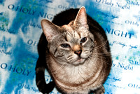 Cats Christmas Portraits 2010-0544-2